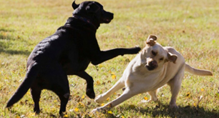 ask an expert: brad, what should i do about an aggressive dog owner?
