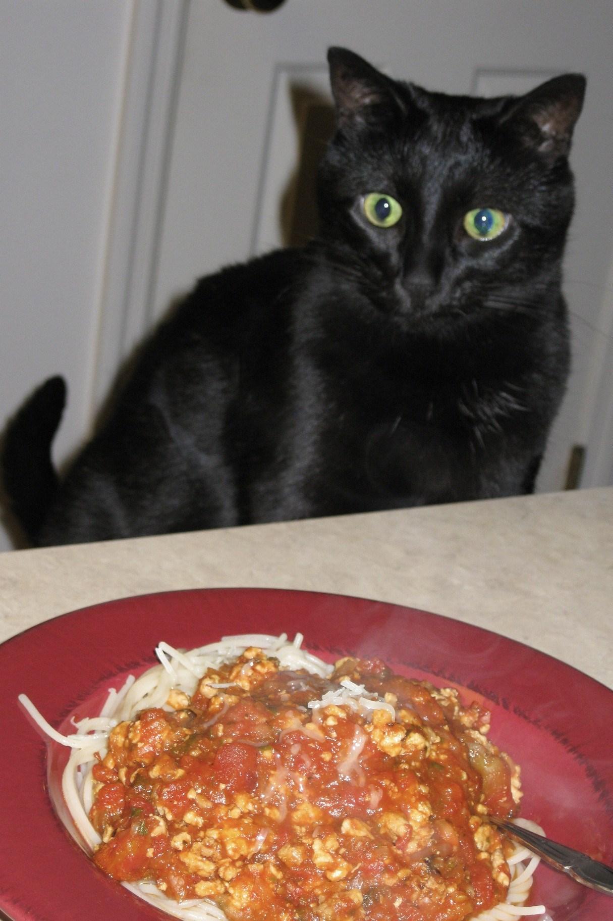 cat doesn t eat