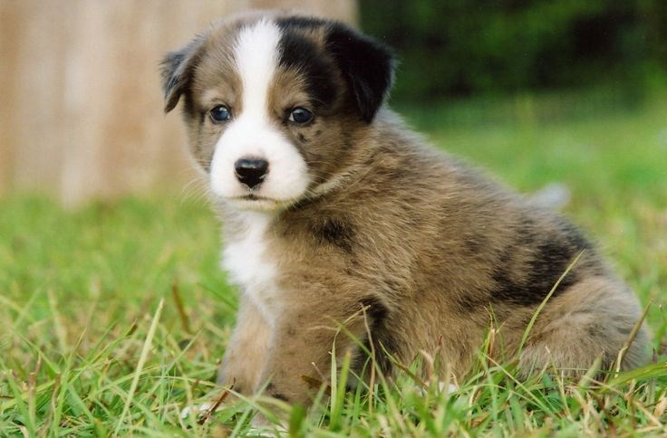 Pretty Names For Little Dogs