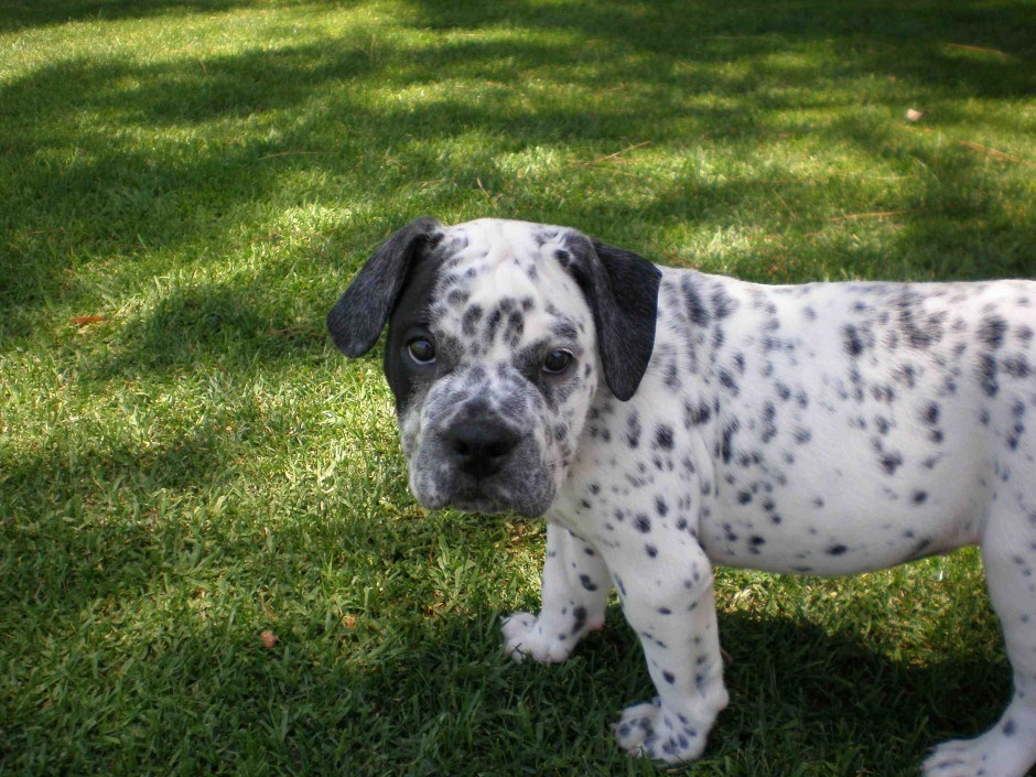 83 Cute Mixed Breed Dogs You Need to Know About | slice.ca