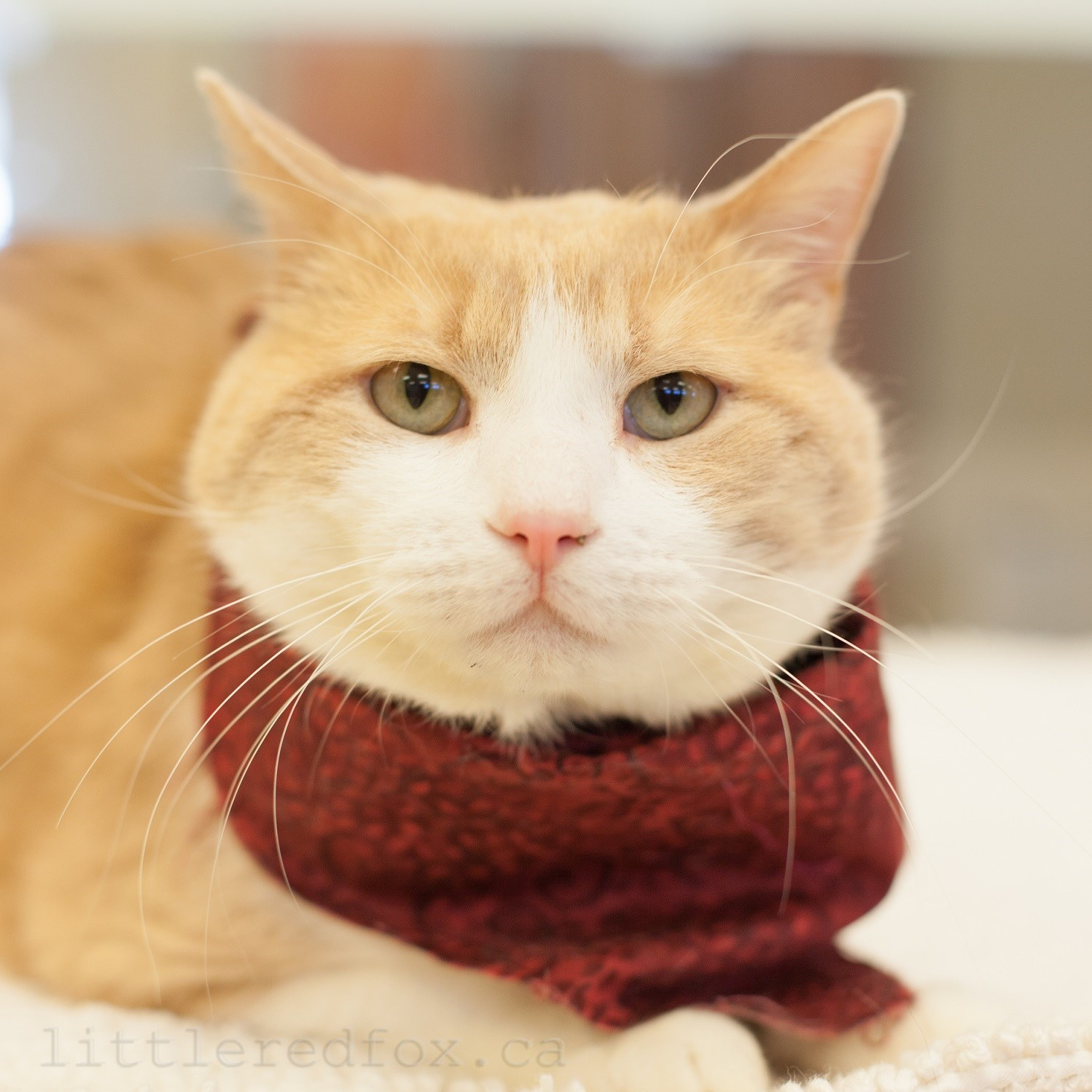Retirement Colonies Senior Citizens Find A Home Away From: Take Me Home Thursdays: Rescue Animals Of The Week