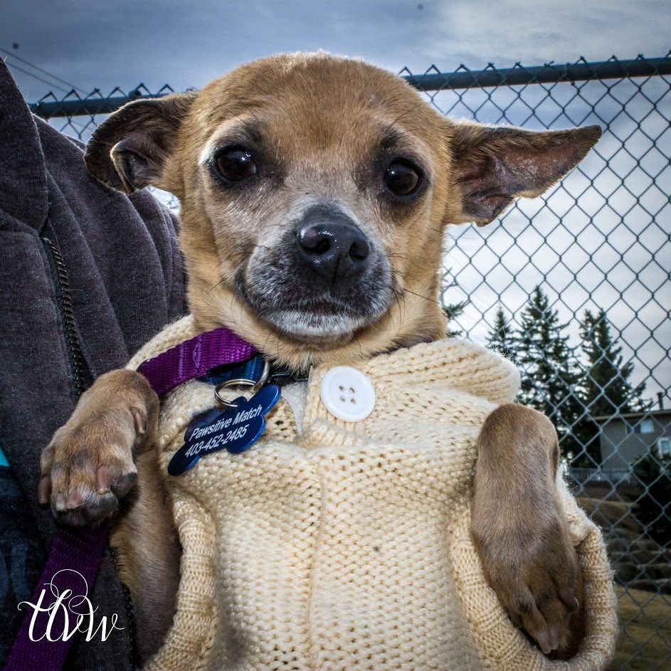 Small Paws Dog Rescue Langley