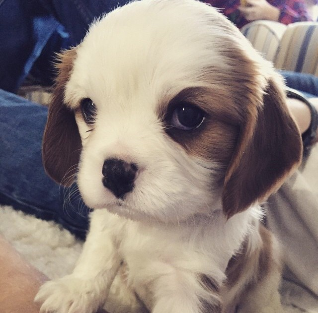 The Cutest Dog Photos of All Time | slice.ca