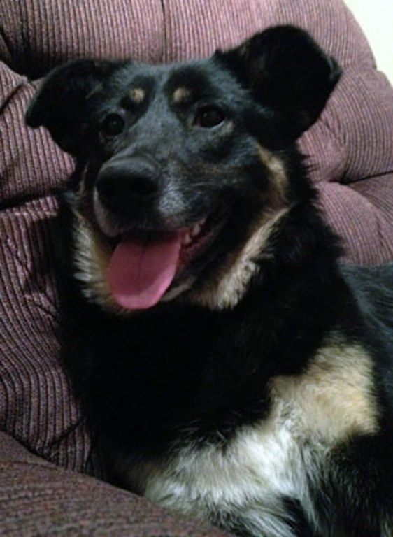 Take Me Home Small Dog Rescue Winnipeg