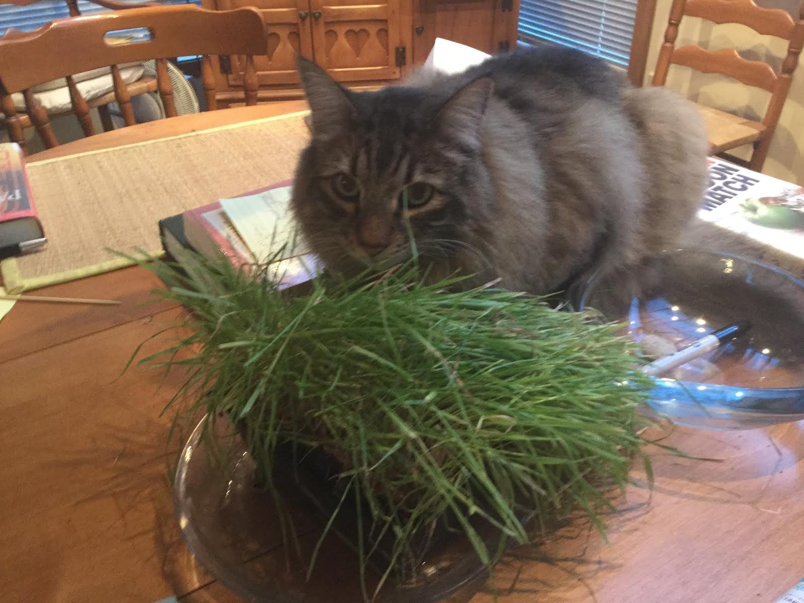 Cat Eating Chive Plant