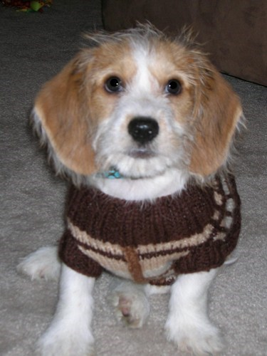 83 cute mixed breed dogs you need to know about