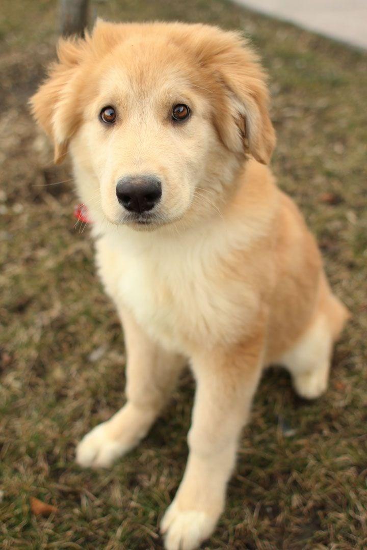 40 Best Medium Sized Dog Breeds - List of Popular Cute ...