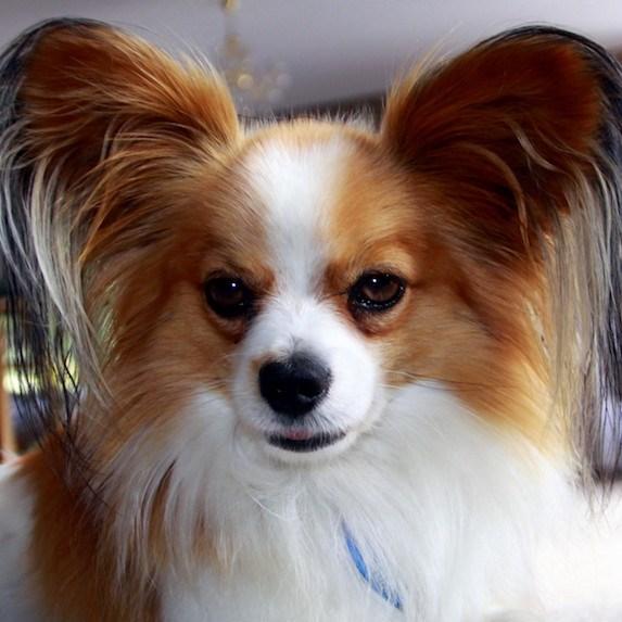 The 10 Most Intelligent Dog Breeds Slice Ca