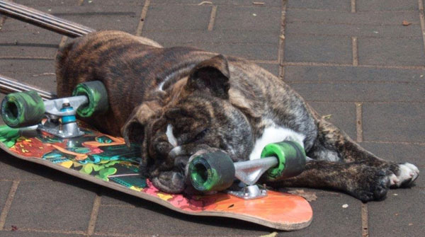 The Best Reader-Submitted Animal Photos Ever