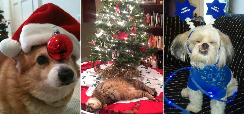 88 Photos of Animals Getting in the Holiday Spirit