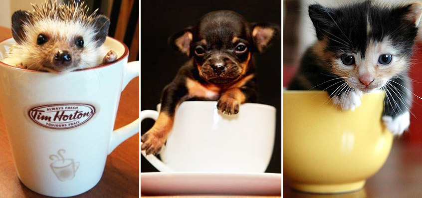50 Insanely Adorable Photographs of Tiny Animals in Cups