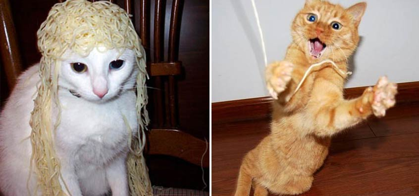17 Hilarious 