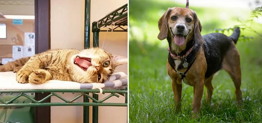 Rescue Animals Looking for Homes This December