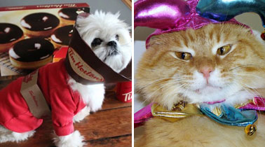 695e32c28c264 The 75 Cutest Halloween Costumes for Pets