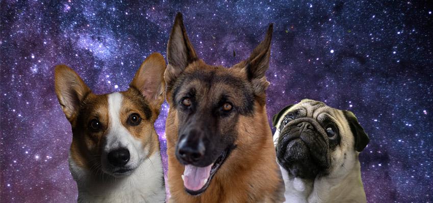 Zodiac Signs as Dog Breeds